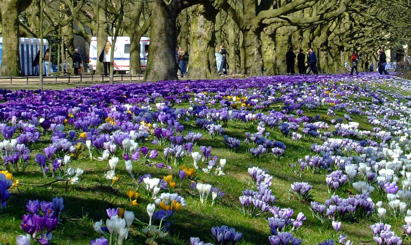 Earlly Spring in Szczecin