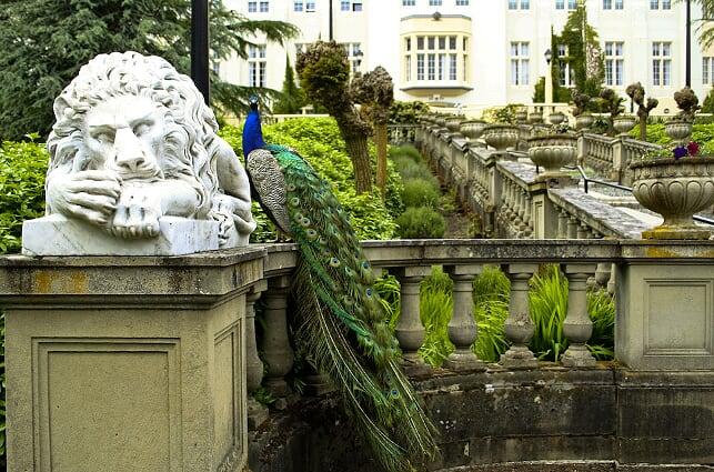 RRU Lion & Peacock